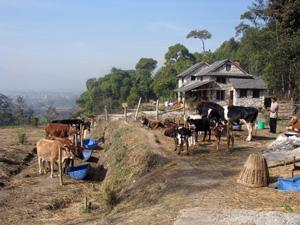 hvem skulle tro at dette er Nepal?